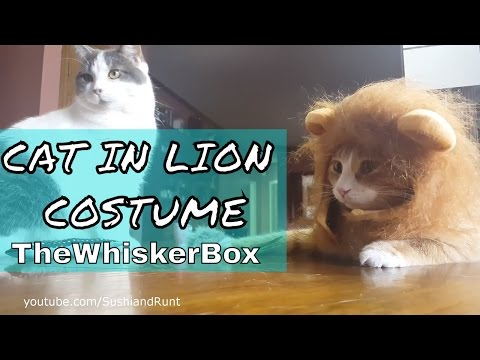 CAT IN LION COSTUME ! - The Whisker Box Unboxing