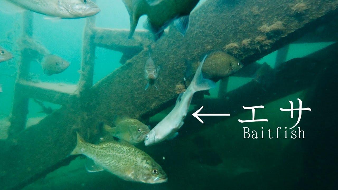 透明度が高い湖で小魚を泳がせてみると・・