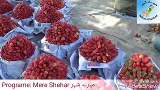 strawberry farming in pakistan How much profitable?latest vide…