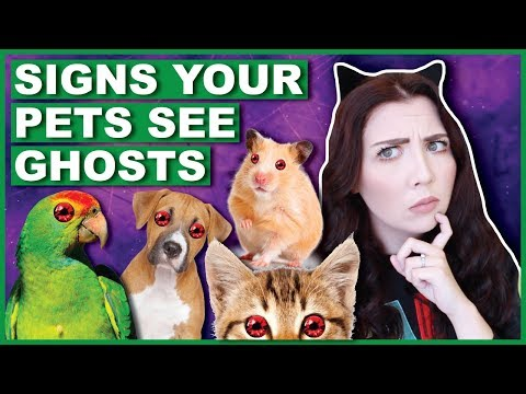 Signs That YOUR Pet Can See Ghosts (With Footage)