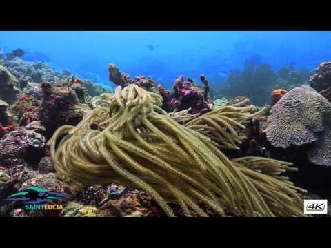 Fairy land with Dive Saint Lucia