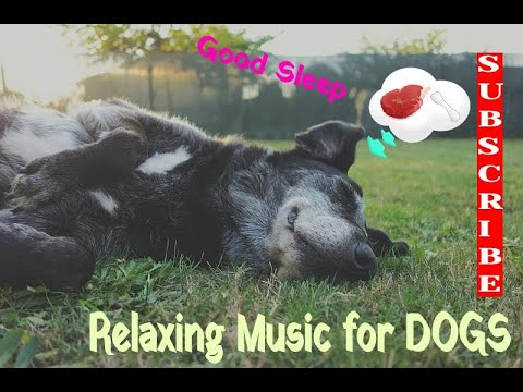 Relaxing music for DOGS, one hour to play!!! - (maybe for some other pets)
