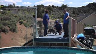 Episode #211 - Dog & Cat Training With Joel Silverman - Dock Jumping Dogs
