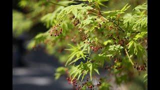 Самые популярные декоративные растения в Японии