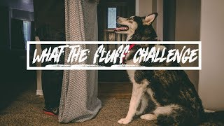 TRICKING MY HUSKY (WHAT THE FLUFF CHALLENGE)