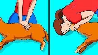 6 Способов Спасти Жизнь Домашнему Животному в случае ЧП