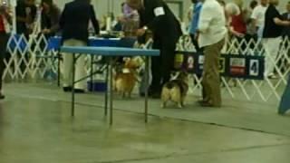 Duluth Mn Akc Dog Show