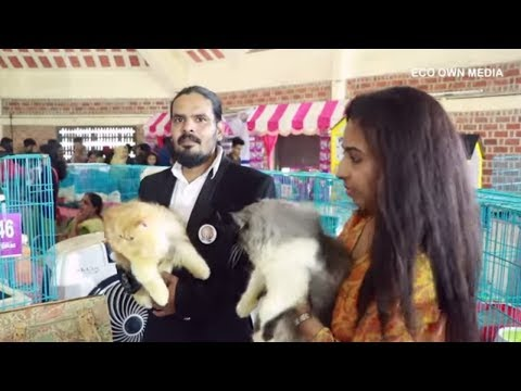 KCFA Intranational Cat Show thrissur| ACF | WCF