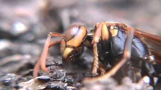 春に生まれてからひたすらに働き、ついに最期を迎えた働き蜂。対照的に...