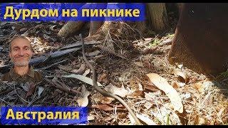 Природа Австралии. Дурдом на пикнике. (видео 026)