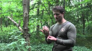 Bushcraft tips: insect repellent