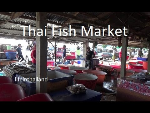 Thailand fresh fish market, mostly snake head, climbing perch, and catfish.