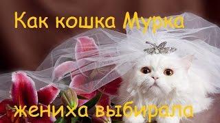 АrcheAge Как кошка Мурка жениха выбирала