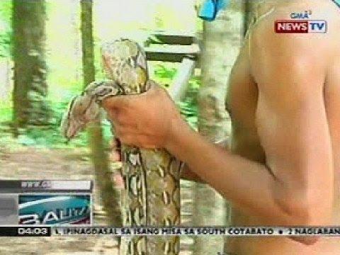 BP: 10 ft. na sawang nahuli sa ilog sa Bangued, Abra, kinatay at kinain ng mga residente
