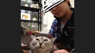 おれ、ねこ 田中一貴 検索動画 2