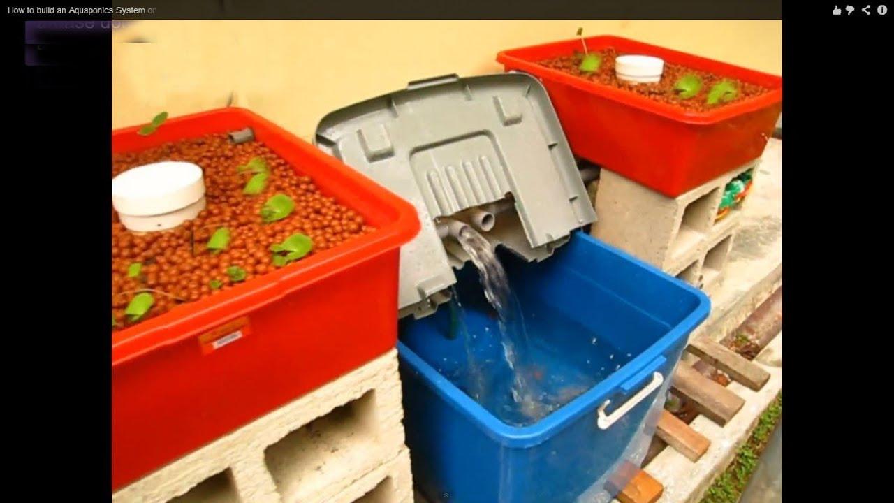 Aquaponic System | | Aquaponics Made Easy