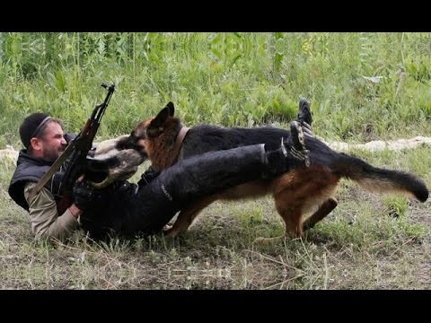 DOG BREED Extreme Military & Police Dogs [Mr Fahey]