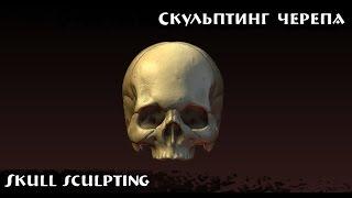 Skull sculpting in Blender / Скульптинг черепа в Blender