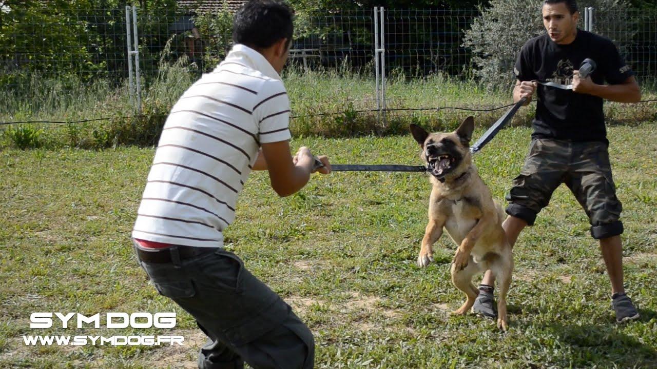 LE CHIEN LE PLUS AGRESSIF | FunnyDog.TV