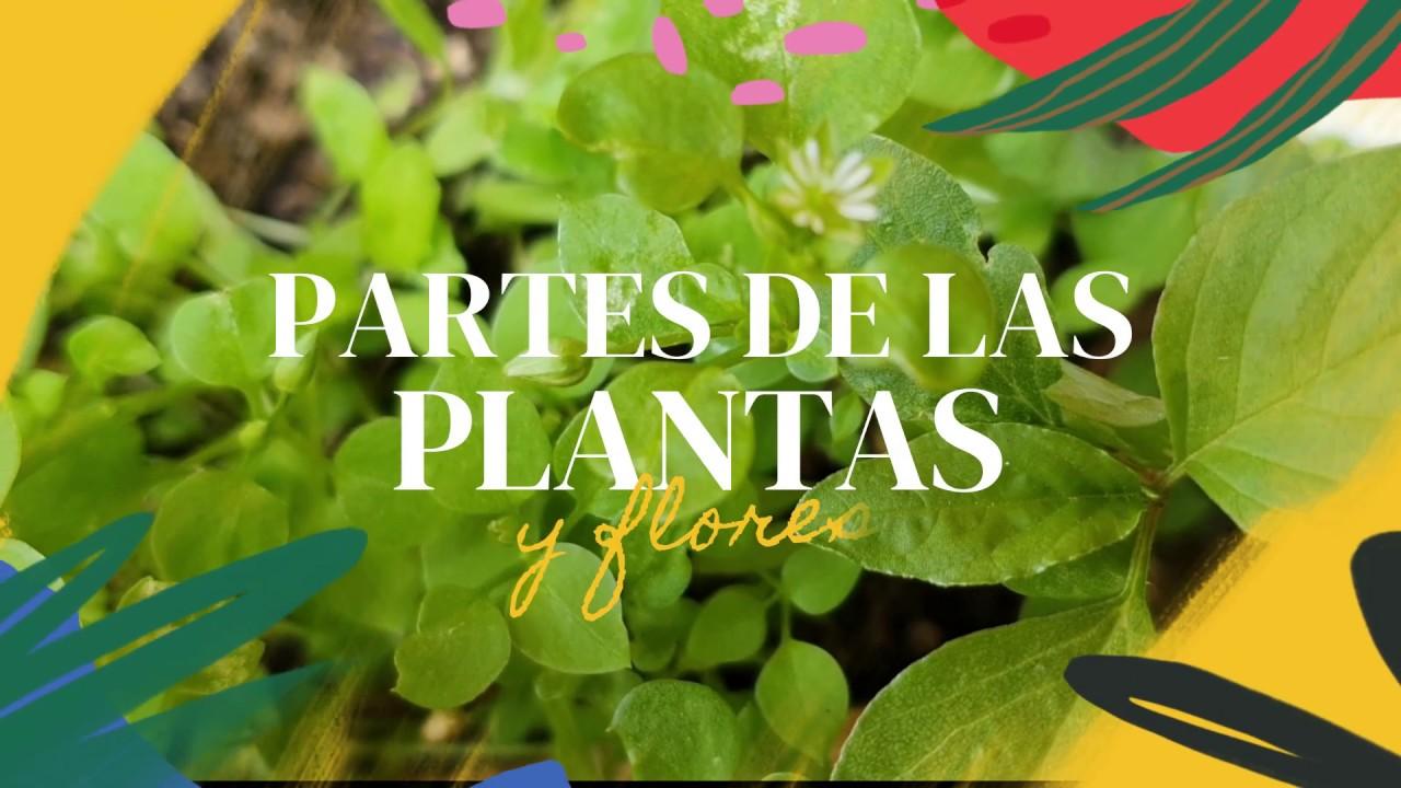 La planta y sus parte. las plantas, flores y sus divisiones Ciencias naturales