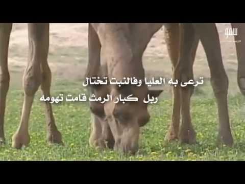 شيلة يانجد كلمات الشاعر غانم جلوي الرزيني أداء المنشد محمد الجش