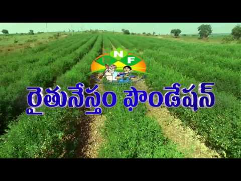 Natural Farming on Red gram Cultivation by Narsimha Reddy