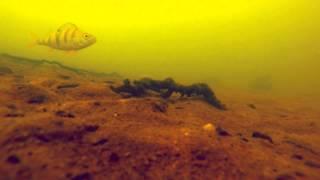 Истринское Водохранилище Зимой, Подводное видео