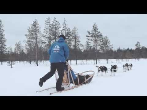 How to drive a husky sledge, Lapland, Finland
