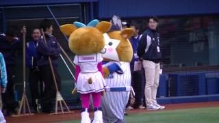 円陣に加わるDB.スターマン&キララ 2013/4/21 thumbnail
