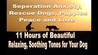 11 Hours of Beautiful Music Tones for Dog Relaxation(tested beautifully)