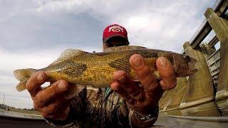 Sauger Fishing - Catching Sauger and Bass At Guntersville Dam