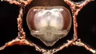 видео Биология размножения и развития клещей