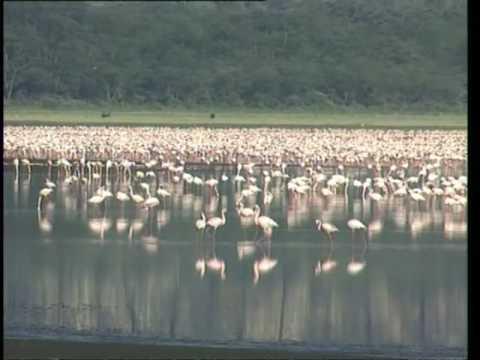 Découverte du Monde - Parcs et réserves du Kenya