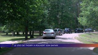 Yvelines | Le parc de Thoiry a rouvert son safari