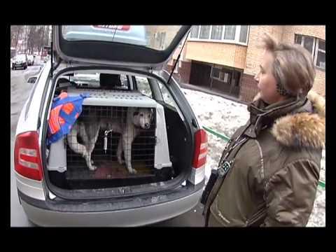 Уроки безопасности - Перевозка животных - Полезные гаджеты
