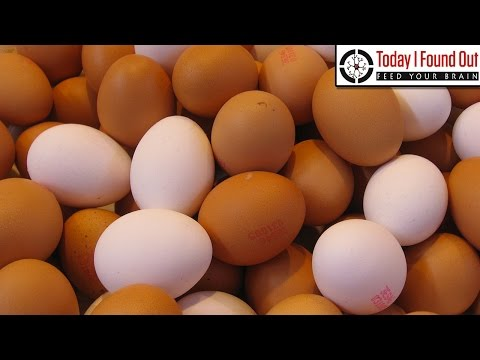 What's the Difference Between Brown Eggs and White Eggs?
