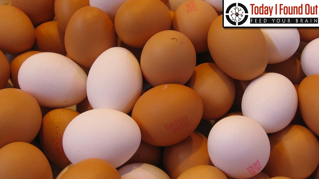 what s the difference between brown eggs and white eggs youtube