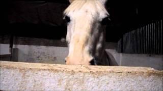 Video sisters horses xxxx download MP3, 3GP, MP4, WEBM, AVI, FLV Juli 2018