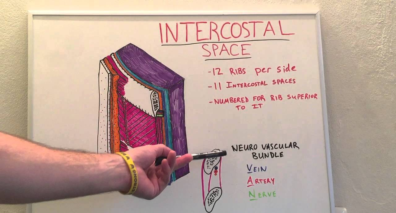 Intercostal Space - Anatomy Lecture for Medical Students - USMLE ...