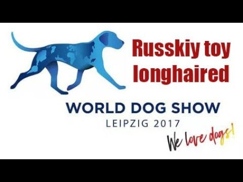 WDS 2017 Leipzig Russkiy toy longhaired