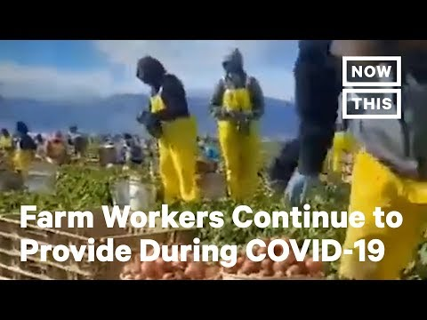 Farm Workers Risk Everything During COVID-19 While Providing Food For Americans | NowThis
