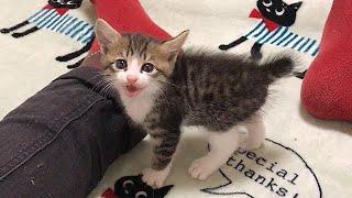 先住猫に会いたいと訴えてくる保護子猫