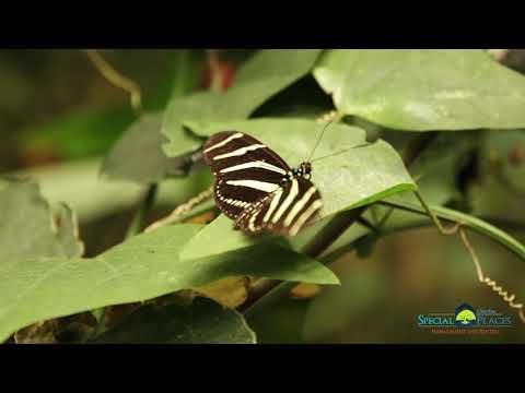 Monteverde Hike & Coffee Trip Video