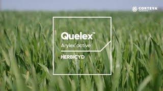 Quelex™ - Innowacja w zwalczaniu chwastów w zbożach ozimych jesienią.