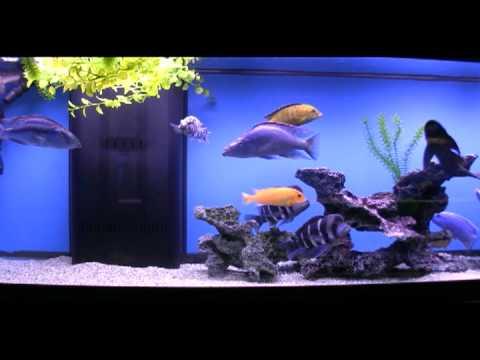 Virginia Aquarium & Marine Science Center National Geographic 3D reviews and user ratings.