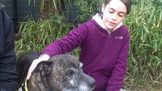 Dogs Trust Education: Junior Canine Carer Winner With Her Favourite Staffy!