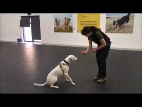 Dogs Trust Basildon: Lily