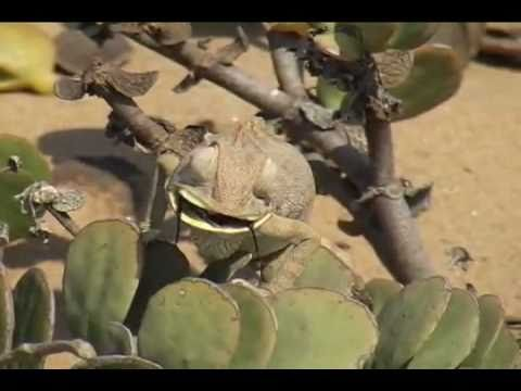 Namibia Living-Desert Tour  Swakopmund