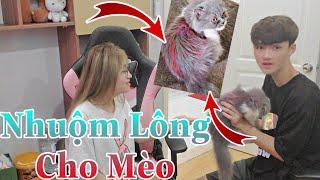 [Vlog Hài] Gao Bạc Chơi Lầy Nhuộm Lông Mèo Cưng Của Cô Ngân Thành 7 Màu Troll Cô Ngân Và Cái Kết