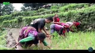 Full Garhwali video song 2015| Syali Meri Anu (स्याळी अनु रोपणी लाण आयी) |Dhoom Singh